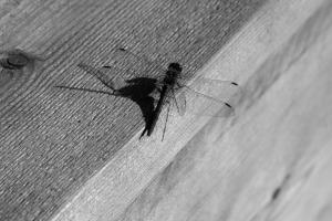 Házi praktikák apró rovarok ellen