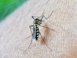 Környezetbarát harc a szúnyogok ellen
